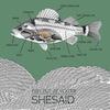 shesaid